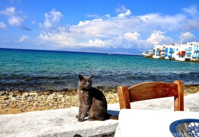 Curl up with a cat by the Sea audio atmosphere