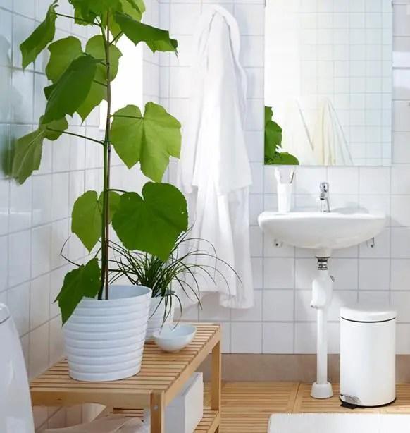 Piante da appartamento quali tenere in bagno  Ambiente Bio