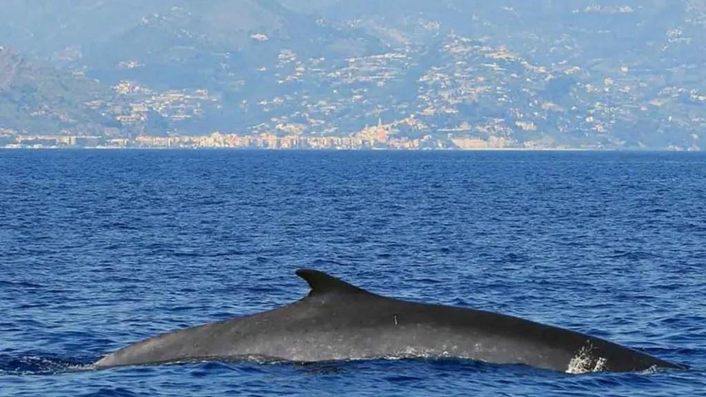 balena isola di plastica mar tirreno