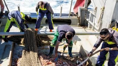 Photo of Recuperan tres toneladas de basura en costas gallegas y valencianas