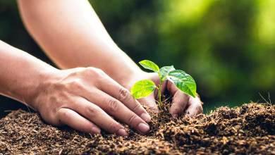 Photo of Impulsa Ryder plan de RSC en México con programas orientados al medio ambiente