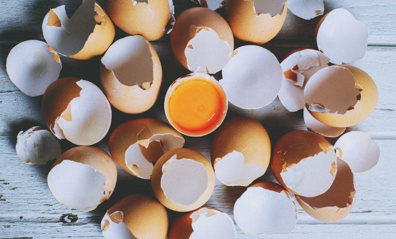 Photo of ¡Plástico de huevos!