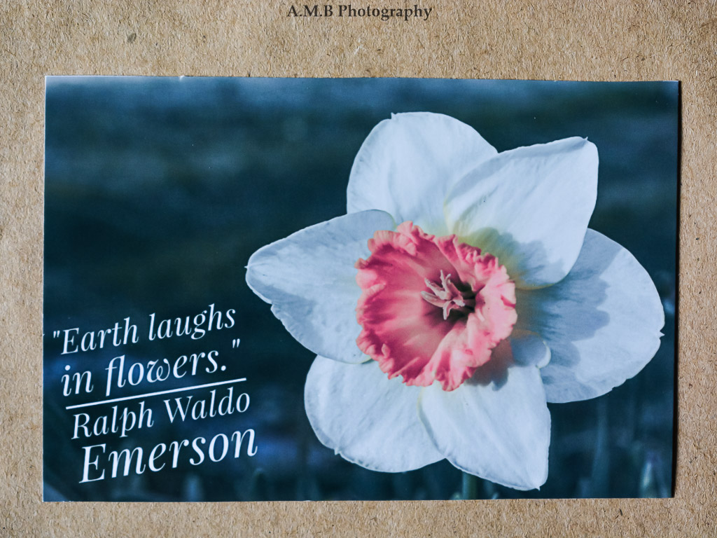 Nature photo magnet nature quotes refrigerator magnet nature an assorted variety of daffodils bloom in our garden each spring love the pink and mightylinksfo