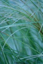 A macro shot of lush green ornamental grass growing at our house in Peoria. Captured in September, 2017.