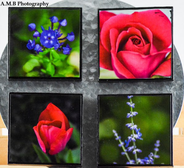Four 4x4 inch artisan canvas magnets. The top left is Purple Flame and the top right is Rose Bud. Bottom row, left is Red and bottom row, right is Russian Sage. All were captured in m home garden in the Spring of 2017, and all canvases made in the Spring of 2018.