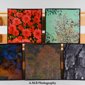 6x6 inch artisan canvas magnets of 5 of my images. Canvases created in the Fall of 2018.