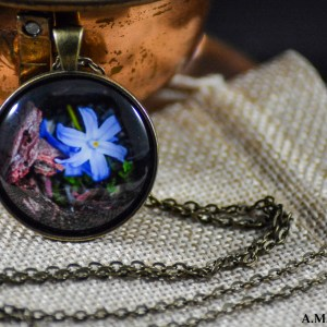 A little blue snow glory set in an Antique Bronze bezel with a brass chain. Image captured in the Spring of 2018 and pendant created in the Winter of 2019.