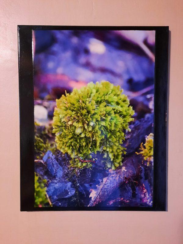 Green Tuft Moss