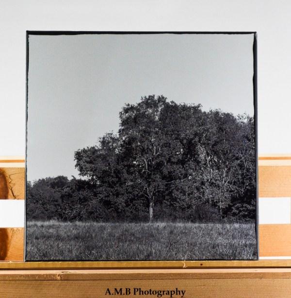Mile Meadow