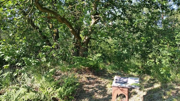 Wandelen over het Peelpad bij Fusilladeplaats bij landgoed Bronlaak