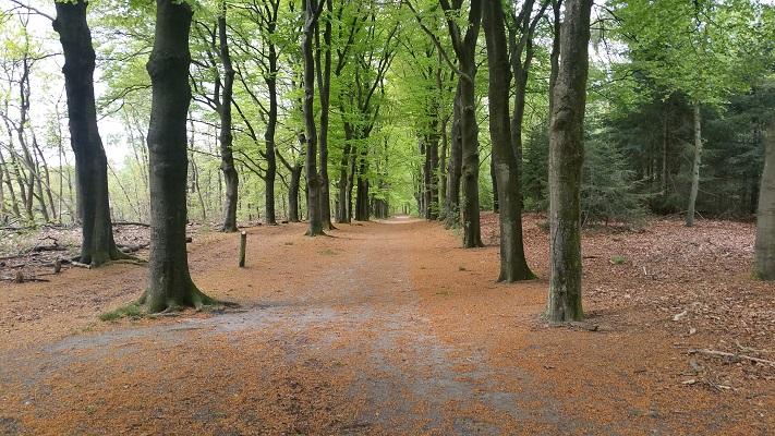 Bossen bij Schaarsbergen op wandeling over Roots Natuurpad van Schaarsbergen naar Doorwerth