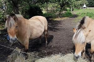 Wandelen over Achterhoekpad bij paarden in Westendorp