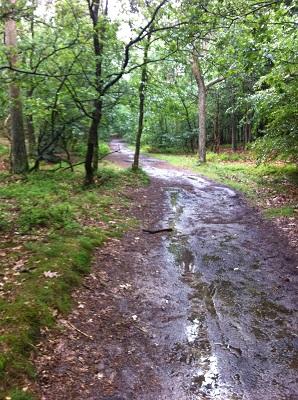Bossen bij Norg op een wandeling over het Drenthepad van Norg naar Roden