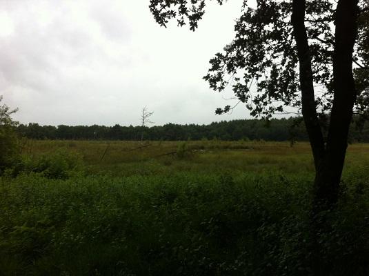 Noordenveld op een wandeling over het Drenthepad van Norg naar Roden
