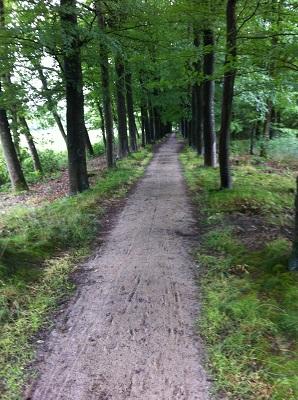 Bosweg op een wandeling over het Drenthepad van Peizerwold naar Roden