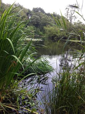 Waterpartij op een wandeling over het Drenthepad van Peizerwold naar Roden