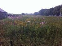 Bloemenweelde op wandeling over Drenthepad van Uffelte naar Ruinen