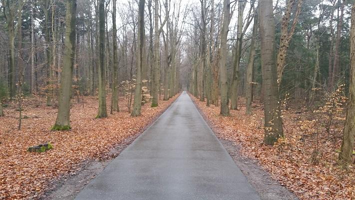 Bossen Oudemirdum op wandeling over het Elfstedenpad van Oudemirdum naar Sloten