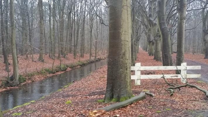 Bossen bij Kippenburg op wandeling over het Elfstedenpad van Oudemirdum naar Sloten