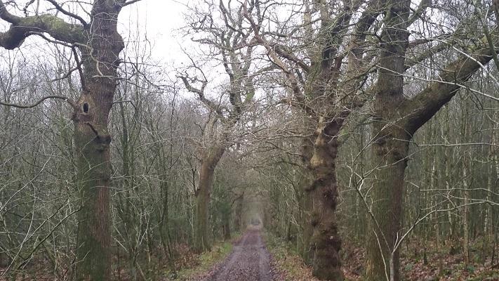 Wandelen over het Groot Frieslandpad in bossen bij Oud Beets