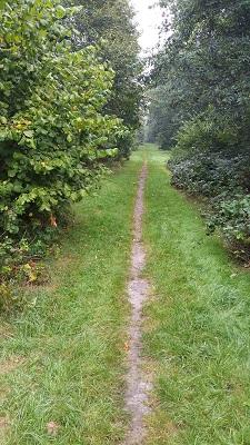 Wandelen over het Groot Frieslandpad richting Bellingwolde over graspad