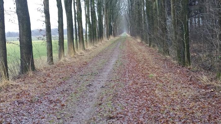 Wandelen over het Groot Frieslandpad bij Wijnjewoude