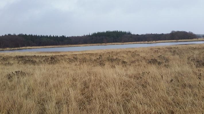 Wandelen over het Groot Frieslandpad over de Duurswouderheide