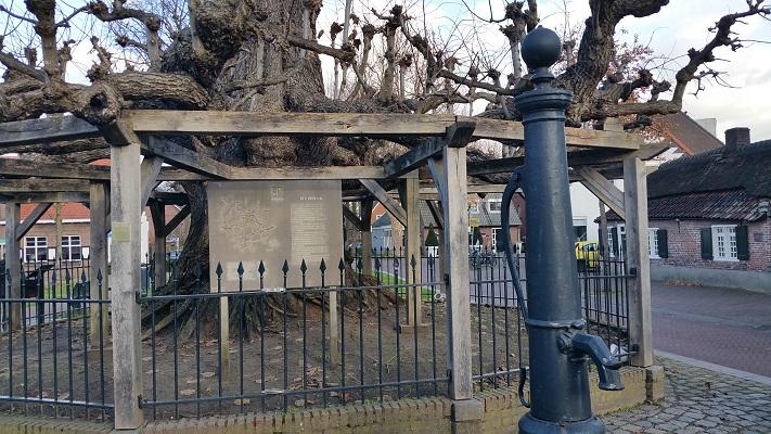 Oude boom in Nuenen tijdens een wandeling in het spoor van Van Gogh in Nuenen