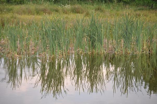 Natuur langs de Leijgraaf tijdens wandeling langs riviertje de Leijgraaf van Boekel naar Middelrode