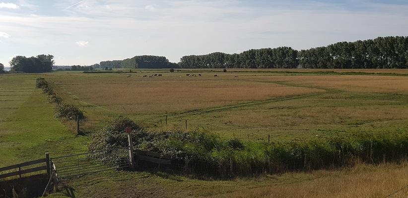Polderland bij Bommel op een wandeling over het Maaspadvan Stad aan 't Haringvliet naar Willemstad