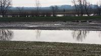 Nieuwe natuur in Overdiepsepolder tijdens een wandeling over het Maaspad van Waspik naar Waalwijk