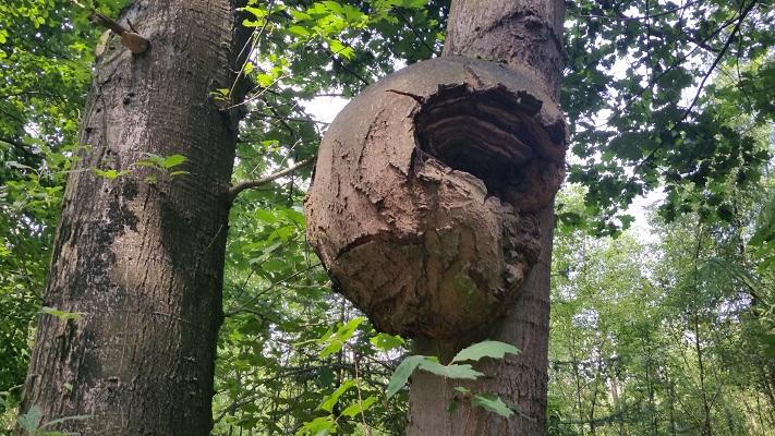 Wandelen over het Marikenpad bij boom bij Nieuwkerk