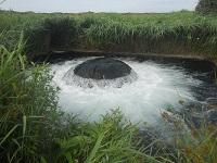 Infiltratie Noordhollands Duinreservaat tijdens een wandeling over het Nederlands Kustpad van Santpoort naar Castricum
