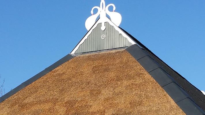 Zwanehals op boerderij op een wandeling over het Nederlands Kustpad van Franeker naar Sint Jacobiparochie