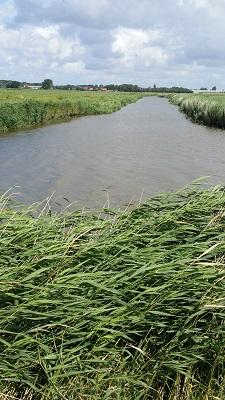 Roptavaart op een wandeling van Franeker via Wijnaldum naa Sexbierum over het Nederlands Kustpad