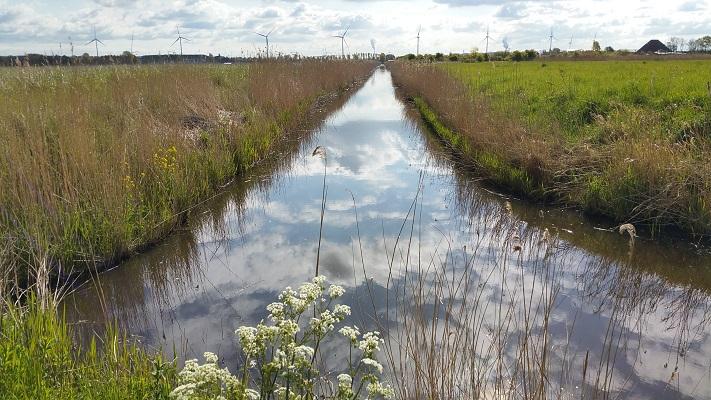 Westhoffplas Spaarndam tijdens wandeling van Pont Buitenhuizen naar Halfweg over het Noord-Hollandpad
