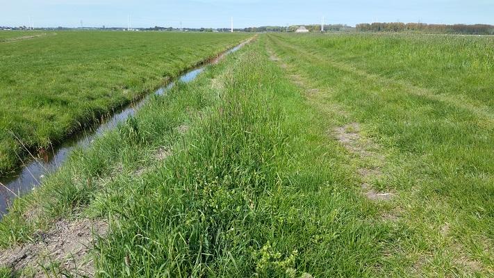 Inlaagpolder tijdens wandeling van Pont Buitenhuizen naar Halfweg over het Noord-Hollandpad