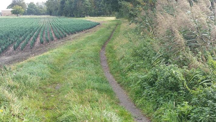 Wandelen over het Peelpad in Liessel