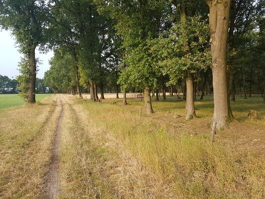 Wandelen over het Peelpad in de Liesselse bossen