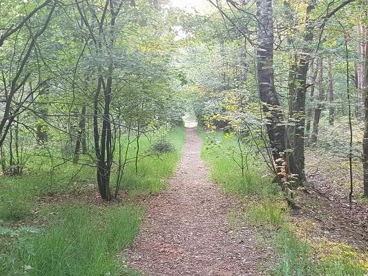 Wandelen over het Peelpad in de Dennendijkse Bossen