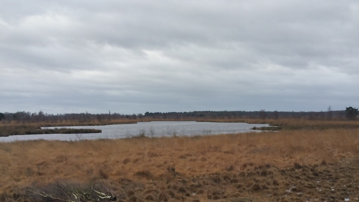 Wandelen over het Peelpad in De Groote Peel