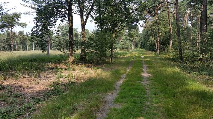 Wandelen over het Peelpad in de Ballonzuilbossen