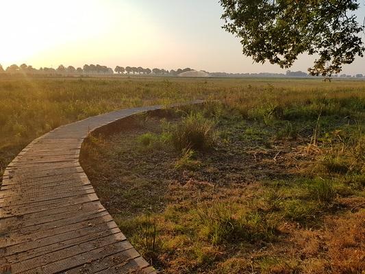 Wandelen over het Peelpad op het vlonderpad in De Banen