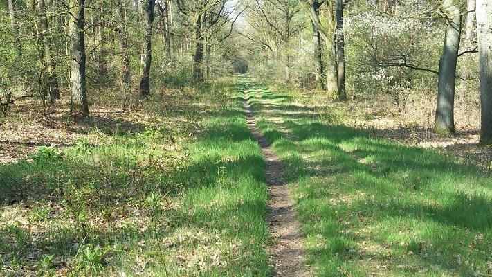Wandelen over het Peelpad in de Ballonzuilbossen bij Venray
