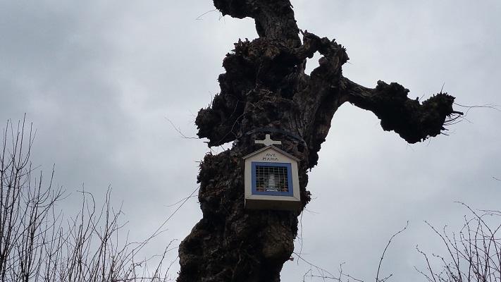 Wandelen over het Peerkepad in de voetsporen van Peerke Donders bij boomkapel in Elsloo
