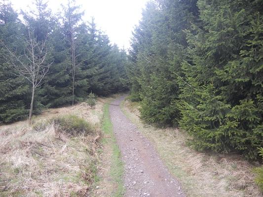 Wandelpad door bossen tijdens wandeling van Bahnhof Rennsteig naar Rondell op wandelreis in Thüringen in Duitsland