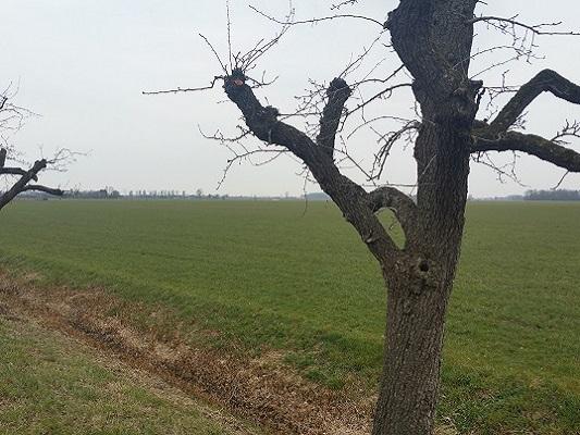 Valburg op wandeling over Roots Natuurpad van Doorwerth naar Winssen