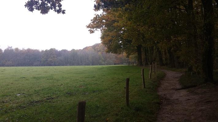 Bosrand bij Hernen op een wandeling van Hernen naar Winssen over het Roots Natuurpad