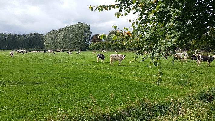 De Geelders tijdens een wandeling van Liempde naar Schijndel over het Roots Natuurpad