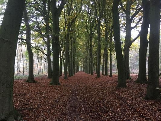 Laan bij kasteel Hernen tijdens wandeling van Ravenstein naar Hernen over het Roots Natuurpad